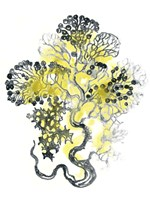 Citron Sea Kelp I Framed Print