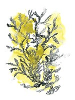 Citron Sea Kelp II Framed Print