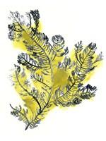 Citron Sea Kelp IV Framed Print