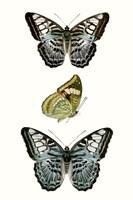 Butterfly Specimen I Fine Art Print