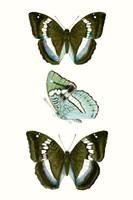 Butterfly Specimen II Fine Art Print