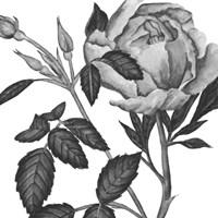 Flowers in Grey I Framed Print