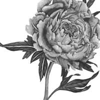 Flowers in Grey II Framed Print