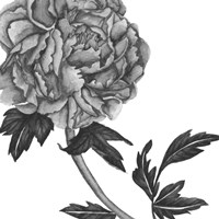 Flowers in Grey III Framed Print