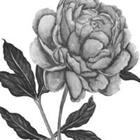 Flowers in Grey IV Framed Print
