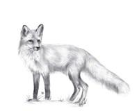 Wildlife Trail I Fine Art Print