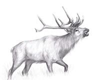 Wildlife Trail II Fine Art Print