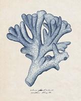 Sea Coral Study I Fine Art Print