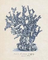 Sea Coral Study IV Fine Art Print
