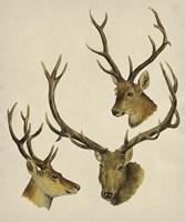 Wild World I Framed Print