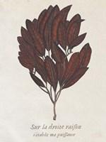 Seaweed Study II Framed Print