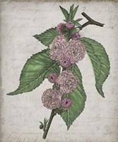 Floral Memory I Framed Print