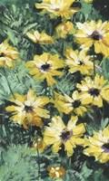 Floral Impressions II Framed Print