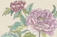 Peony Blooms I Framed Print