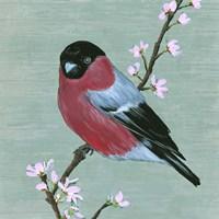 Bird & Blossoms I Framed Print