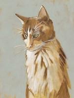 Lap Cat II Fine Art Print