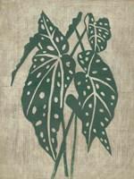Vintage Greenery II Framed Print