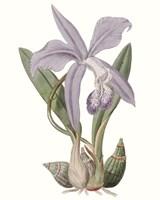 Lavender Beauties IV Fine Art Print