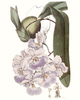 Lavender Beauties V Fine Art Print