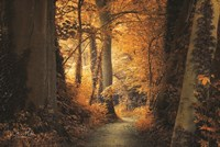 Path to the Light Fine Art Print