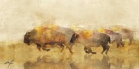 Traveling Bison II Fine Art Print