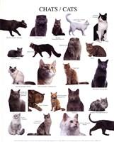 """Cats by Atelier Nouvelles Images - 10"""" x 12"""""""