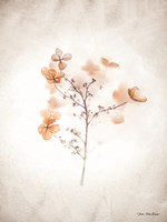 Dried Flowers Fine Art Print