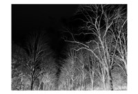 Branches Fine Art Print
