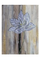 Narrow Tulip Hall Fine Art Print