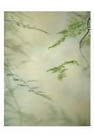 Soft Adagio 1 Fine Art Print
