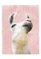 Llama Love 2 Fine Art Print