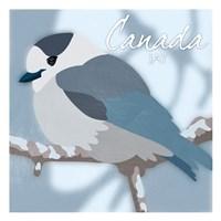 Canada Jay Fine Art Print