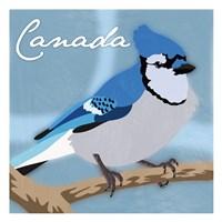 Canada Blue Jay Fine Art Print