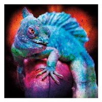 Party Gecko Fine Art Print