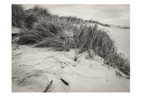 Beachy Dunes Fine Art Print