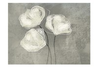 Sketched White Blooms 2 Fine Art Print