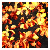 Bunch Of Leaves Fine Art Print