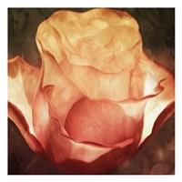 Fire Flower Fine Art Print