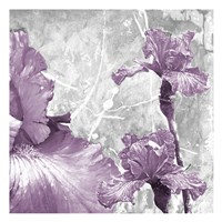 Touch Of Plum 1 Fine Art Print