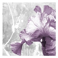 Touch Of Plum 2 Fine Art Print