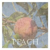 Peach Fine Art Print