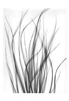 Grass 2 Fine Art Print