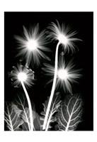 Shinning Florals Fine Art Print