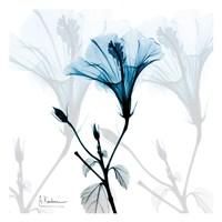 Hibiscus Azure Fine Art Print