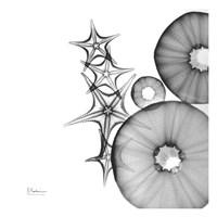 Aquatic Slice 1 Fine Art Print