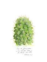 Cactus Verse I Framed Print