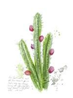 Cactus Verse II Framed Print