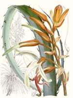 Tropical Variety III Fine Art Print