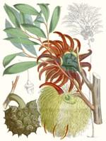 Tropical Variety IV Framed Print