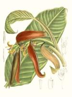 Tropical Variety VIII Fine Art Print